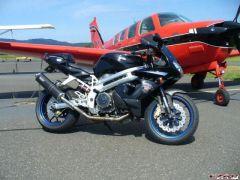 Falco - Beech