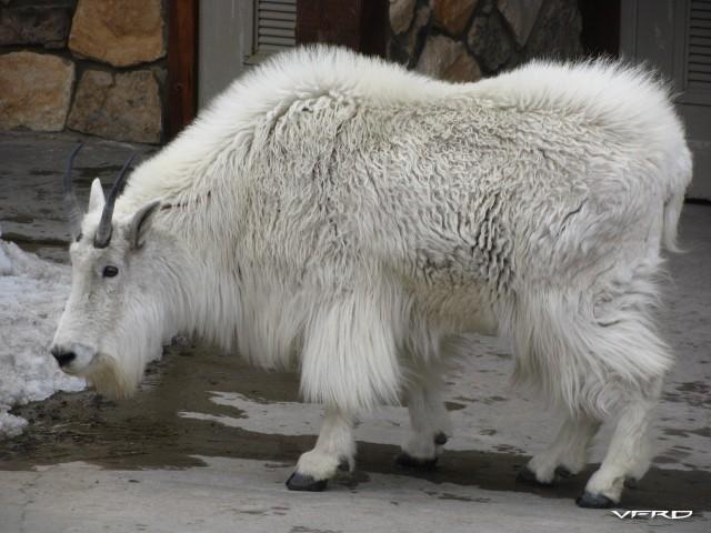 Magnificent animal