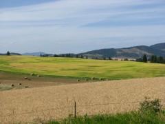 Wheat fields of Idaho