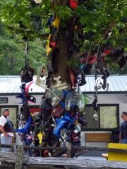 Tree of Shame at Deals Gap