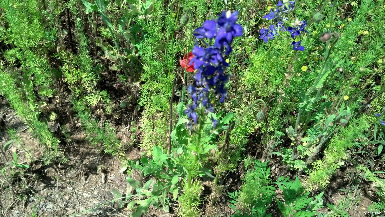 Wild Flowers on the side of the hwy