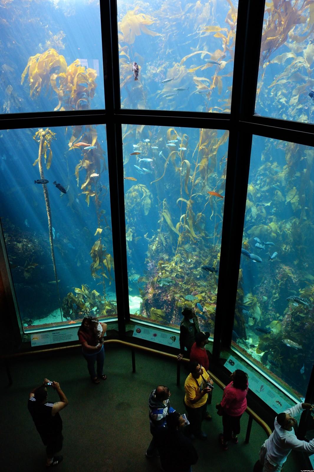 69 - Monterey Bay Aquarium, Cal