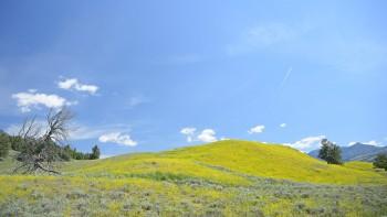 110 Lamar Valley, Yellowstone NP