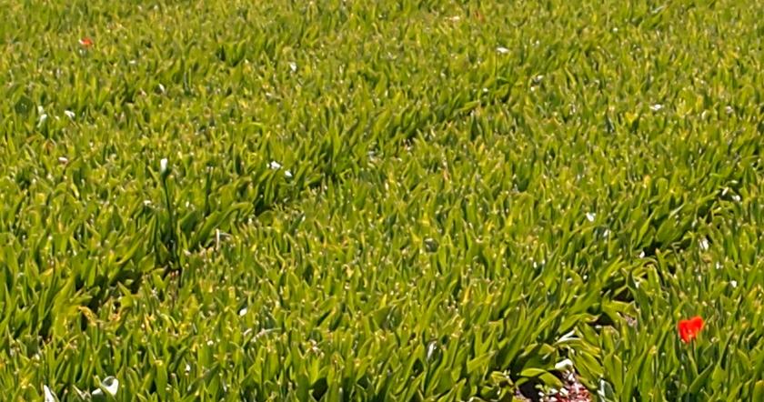 flower4.jpg.5c8a15122bff9c6d9a0e76640d9c9e4e.jpg
